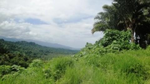 East-of-Eden, Vanuatu